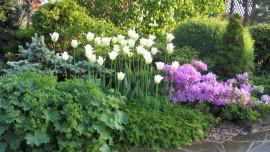 Сад 12 соток. Весна