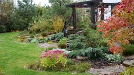 Сад цветущего разнотравья - осень
