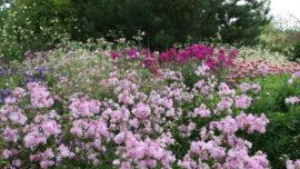 Цветники селекционного центра (конец весны - начало лета)