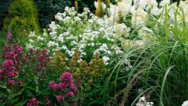 Мелкоцветковые флоксы